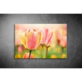 Tulipán Vászonkép 001