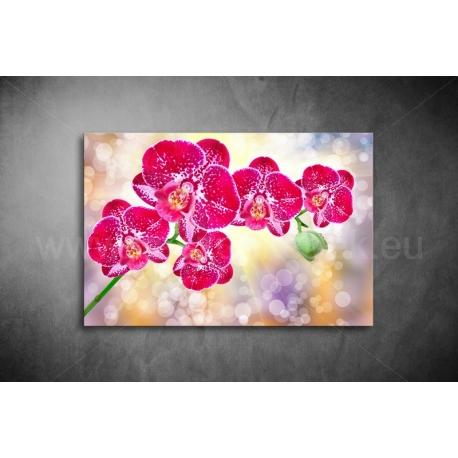 Orchidea vászonkép 004