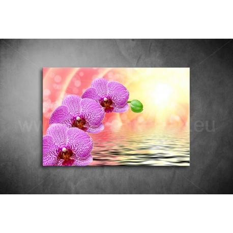 Orchidea Vászonkép 006