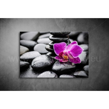 Orchidea Vászonkép 007