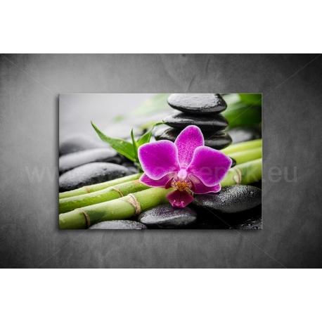 Orchidea Vászonkép 008