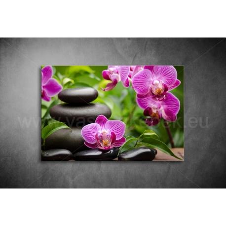 Orchidea Vászonkép 009