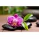 Orchidea Vászonkép 011