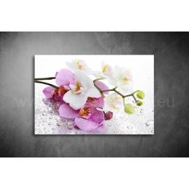 Virág Vászonkép - (2cm-es kerettel)