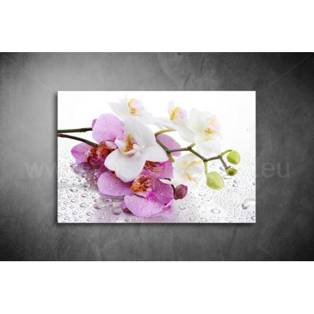 Orchidea Vászonkép 012
