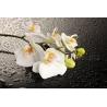 Orchidea Vászonkép 015
