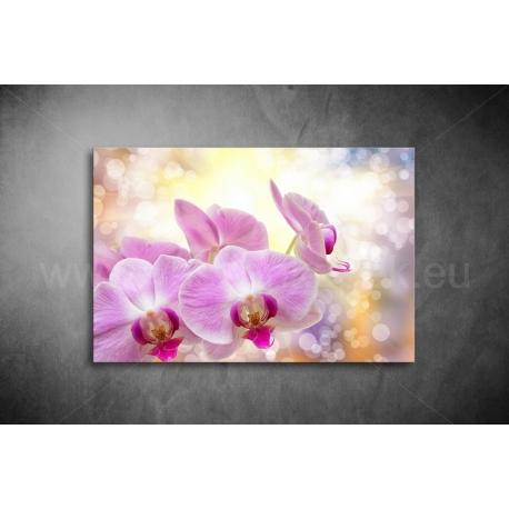 Orchidea Vászonkép 019