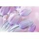 Lila Tulipánok Vászonkép 020