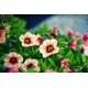 Virág Vászonkép 022