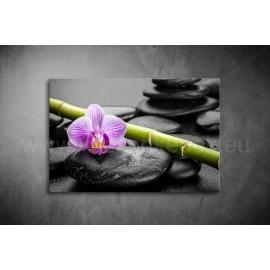 Orchidea kövekkel Vászonkép 023