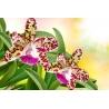 Orchidea Vászonkép 024