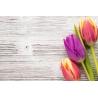 Tulipános Vászonkép 025