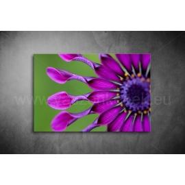 Virág Vászonkép 034