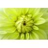 Virág Vászonkép 035