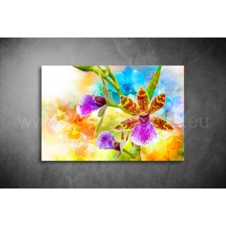 Orchidea Vászonkép 037