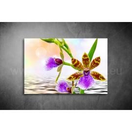 Orchidea Vászonkép 039