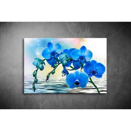 Kék Orchidea Vászonkép 041