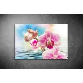 Orchidea Vászonkép 042