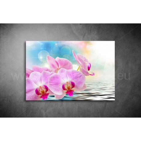 Orhidea Vászonkép 043