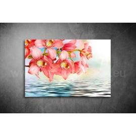 Orchidea Vászonkép 044