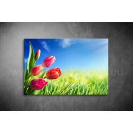 Tulipános Vászonkép 047