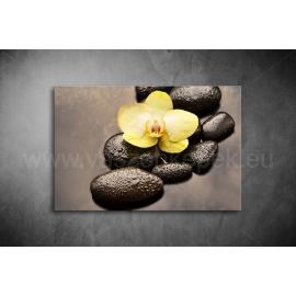Orchidea Vászonkép 049