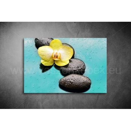 Orchidea Vászonkép 051