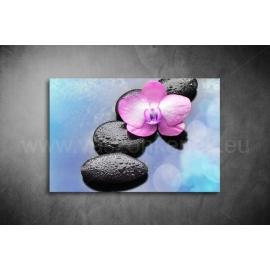 Orchidea Vászonkép 052