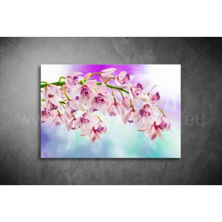 Orchidea Vászonkép 053