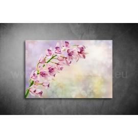 Orchidea Vászonkép 054