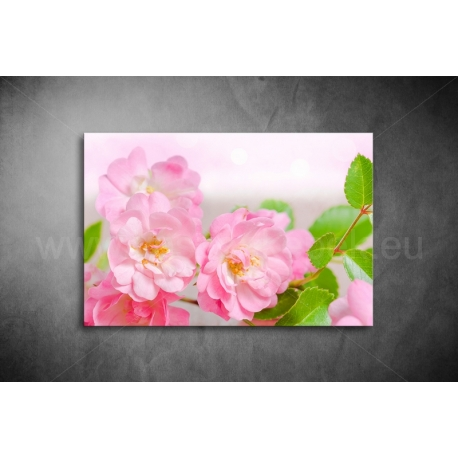 Virág Vászonkép 065