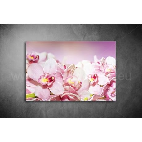 Rózsaszín Orchideák Vászonkép 067