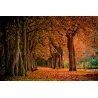Őszi Erdő Vászonkép 109