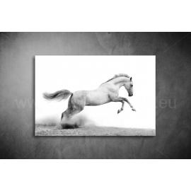 Fehér Ló Vászonkép 002