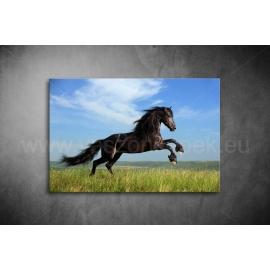 Fekete Ló Vászonkép 003
