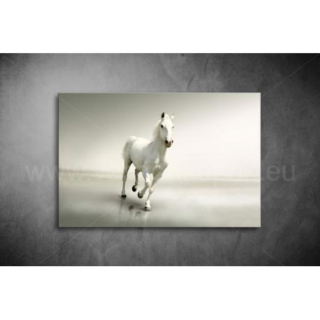 Fehér Ló Vászonkép 011