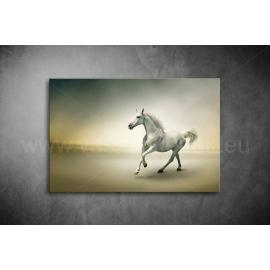 Fehér Ló Vászonkép 012