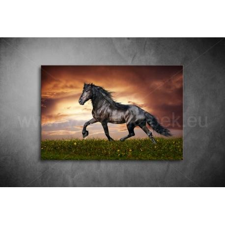 Fekete Ló Vászonkép 014