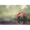 Medve Vászonkép 019