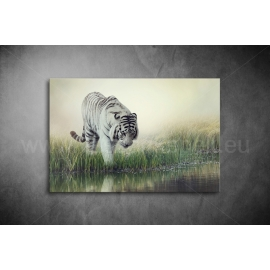 Fehér Tigris Vászonkép 032