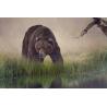 Medve Vászonkép 033