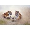 Tigrisek Vászonkép 034