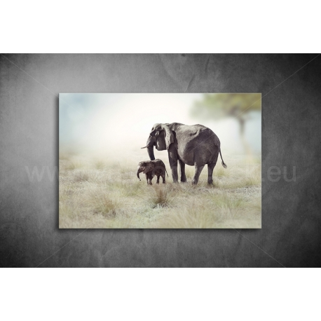 Elefántok Vászonkép 040