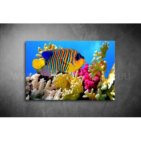Pillangóhal Vászonkép 041