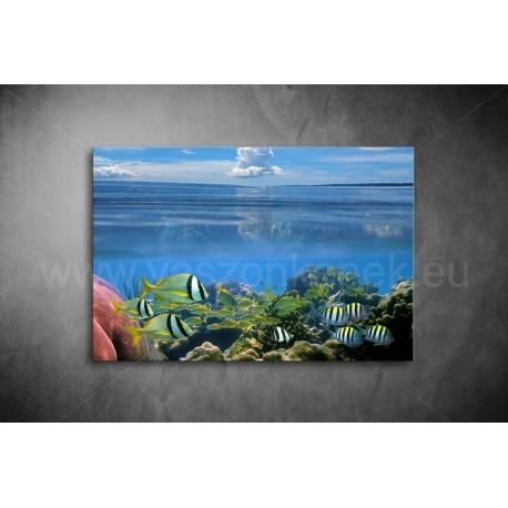 Korallzátony Vászonkép 046