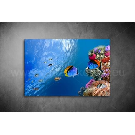 Halak,Korallok Vászonkép 052