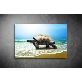 Teknős Vászonkép 061