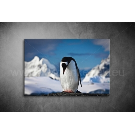 Pingvines Vászonkép 062