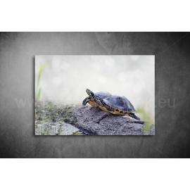 Teknős Vászonkép 069