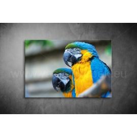 Papagájos Vászonkép 070